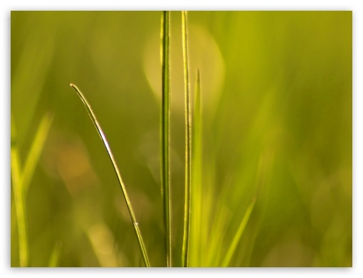 Grass 2 HD wallpaper for Standard 4:3 5:4 Fullscreen UXGA XGA SVGA QSXGA SXGA ; Other 3:2 DVGA HVGA HQVGA devices ( Apple PowerBook G4 iPhone 4 3G 3GS iPod Touch ) ; Mobile VGA iPhone iPad Phone - VGA QVGA Smartphone ( PocketPC GPS iPod Zune BlackBerry HTC Samsung LG Nokia Eten Asus ) HVGA Smartphone ( Apple iPhone iPod BlackBerry HTC Samsung Nokia ) ; Tablet 2 Android ;