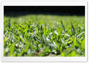 Grass HD Wide Wallpaper for Widescreen