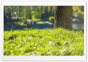 Grass HD Wide Wallpaper for 4K UHD Widescreen desktop & smartphone