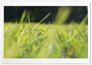 Grass 2 HD Wide Wallpaper for Widescreen