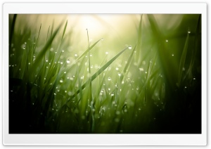 Grass Ultra HD Wallpaper for 4K UHD Widescreen desktop, tablet & smartphone