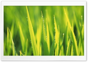 Grass 7 HD Wide Wallpaper for Widescreen