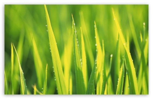 Grass 7 HD wallpaper for Wide 16:10 5:3 Widescreen WHXGA WQXGA WUXGA WXGA WGA ; HD 16:9 High Definition WQHD QWXGA 1080p 900p 720p QHD nHD ; Standard 4:3 5:4 3:2 Fullscreen UXGA XGA SVGA QSXGA SXGA DVGA HVGA HQVGA devices ( Apple PowerBook G4 iPhone 4 3G 3GS iPod Touch ) ; Tablet 1:1 ; iPad 1/2/Mini ; Mobile 4:3 5:3 3:2 16:9 5:4 - UXGA XGA SVGA WGA DVGA HVGA HQVGA devices ( Apple PowerBook G4 iPhone 4 3G 3GS iPod Touch ) WQHD QWXGA 1080p 900p 720p QHD nHD QSXGA SXGA ;