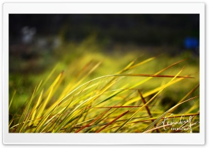 Grass_2 HD Wide Wallpaper for Widescreen