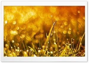 Grass and Sun HD Wide Wallpaper for 4K UHD Widescreen desktop & smartphone