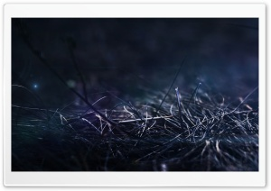 Grass At Night HD Wide Wallpaper for Widescreen