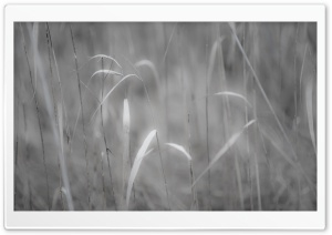 Grass Black And White HD Wide Wallpaper for Widescreen