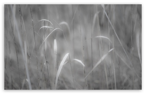 Grass Black And White ❤ 4K UHD Wallpaper for Wide 16:10 5:3 Widescreen WHXGA WQXGA WUXGA WXGA WGA ; 4K UHD 16:9 Ultra High Definition 2160p 1440p 1080p 900p 720p ; UHD 16:9 2160p 1440p 1080p 900p 720p ; Standard 4:3 5:4 3:2 Fullscreen UXGA XGA SVGA QSXGA SXGA DVGA HVGA HQVGA ( Apple PowerBook G4 iPhone 4 3G 3GS iPod Touch ) ; Tablet 1:1 ; iPad 1/2/Mini ; Mobile 4:3 5:3 3:2 16:9 5:4 - UXGA XGA SVGA WGA DVGA HVGA HQVGA ( Apple PowerBook G4 iPhone 4 3G 3GS iPod Touch ) 2160p 1440p 1080p 900p 720p QSXGA SXGA ;