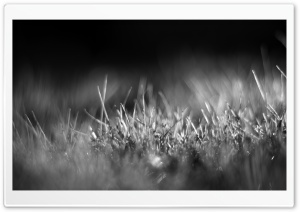Grass Black and White Ultra HD Wallpaper for 4K UHD Widescreen desktop, tablet & smartphone