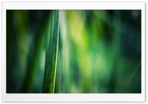 Grass Blade, Bokeh HD Wide Wallpaper for Widescreen