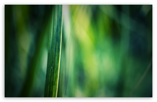 Grass Blade, Bokeh ❤ 4K UHD Wallpaper for Wide 16:10 5:3 Widescreen WHXGA WQXGA WUXGA WXGA WGA ; 4K UHD 16:9 Ultra High Definition 2160p 1440p 1080p 900p 720p ; Standard 4:3 5:4 3:2 Fullscreen UXGA XGA SVGA QSXGA SXGA DVGA HVGA HQVGA ( Apple PowerBook G4 iPhone 4 3G 3GS iPod Touch ) ; Tablet 1:1 ; iPad 1/2/Mini ; Mobile 4:3 5:3 3:2 16:9 5:4 - UXGA XGA SVGA WGA DVGA HVGA HQVGA ( Apple PowerBook G4 iPhone 4 3G 3GS iPod Touch ) 2160p 1440p 1080p 900p 720p QSXGA SXGA ;