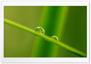 Grass Blade Macro HD Wide Wallpaper for Widescreen