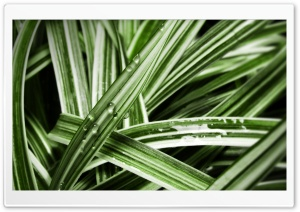 Grass Blades HD Wide Wallpaper for Widescreen