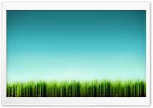 Grass Blades HD Wide Wallpaper for 4K UHD Widescreen desktop & smartphone