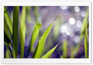 Grass Blades Bokeh HD Wide Wallpaper for Widescreen