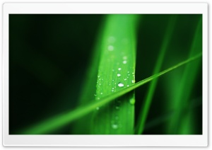 Grass Blades Macro HD Wide Wallpaper for Widescreen