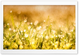 Grass Bokeh HD Wide Wallpaper for Widescreen
