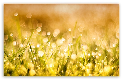 Grass Bokeh HD wallpaper for Wide 16:10 5:3 Widescreen WHXGA WQXGA WUXGA WXGA WGA ; HD 16:9 High Definition WQHD QWXGA 1080p 900p 720p QHD nHD ; UHD 16:9 WQHD QWXGA 1080p 900p 720p QHD nHD ; Standard 4:3 5:4 3:2 Fullscreen UXGA XGA SVGA QSXGA SXGA DVGA HVGA HQVGA devices ( Apple PowerBook G4 iPhone 4 3G 3GS iPod Touch ) ; Smartphone 5:3 WGA ; Tablet 1:1 ; iPad 1/2/Mini ; Mobile 4:3 5:3 3:2 16:9 5:4 - UXGA XGA SVGA WGA DVGA HVGA HQVGA devices ( Apple PowerBook G4 iPhone 4 3G 3GS iPod Touch ) WQHD QWXGA 1080p 900p 720p QHD nHD QSXGA SXGA ; Dual 16:10 5:3 16:9 4:3 5:4 WHXGA WQXGA WUXGA WXGA WGA WQHD QWXGA 1080p 900p 720p QHD nHD UXGA XGA SVGA QSXGA SXGA ;