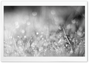 Grass Bokeh Black and White HD Wide Wallpaper for 4K UHD Widescreen desktop & smartphone