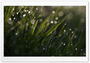 Grass Bokeh Macro HD Wide Wallpaper for Widescreen