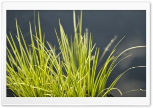 Grass Bundle HD Wide Wallpaper for 4K UHD Widescreen desktop & smartphone