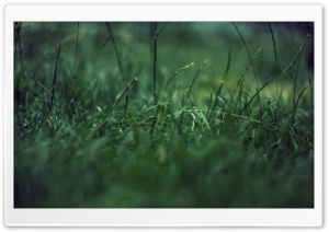 Grass Close Up HD Wide Wallpaper for Widescreen
