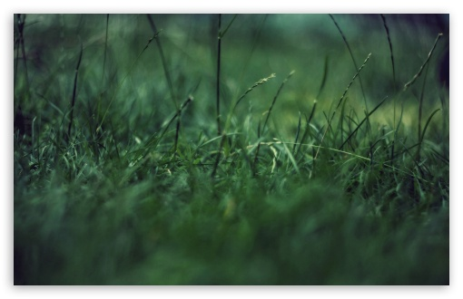 Grass Close Up ❤ 4K UHD Wallpaper for Wide 16:10 5:3 Widescreen WHXGA WQXGA WUXGA WXGA WGA ; 4K UHD 16:9 Ultra High Definition 2160p 1440p 1080p 900p 720p ; Standard 4:3 5:4 3:2 Fullscreen UXGA XGA SVGA QSXGA SXGA DVGA HVGA HQVGA ( Apple PowerBook G4 iPhone 4 3G 3GS iPod Touch ) ; Tablet 1:1 ; iPad 1/2/Mini ; Mobile 4:3 5:3 3:2 16:9 5:4 - UXGA XGA SVGA WGA DVGA HVGA HQVGA ( Apple PowerBook G4 iPhone 4 3G 3GS iPod Touch ) 2160p 1440p 1080p 900p 720p QSXGA SXGA ;