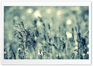 Grass, Cloudy Day HD Wide Wallpaper for Widescreen