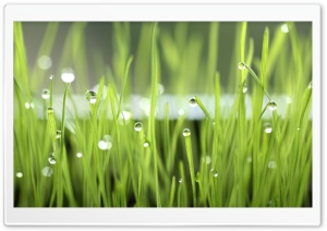 Grass Dew HD Wide Wallpaper for Widescreen
