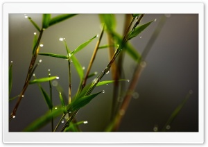 Grass Dew HD Wide Wallpaper for 4K UHD Widescreen desktop & smartphone
