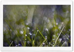 Grass Dew Bokeh HD Wide Wallpaper for Widescreen