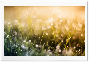Grass Dew, Bokeh HD Wide Wallpaper for Widescreen