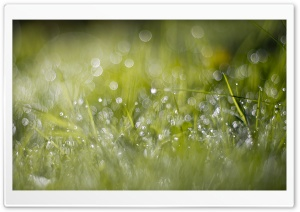 Grass Dew Bokeh HD Wide Wallpaper for 4K UHD Widescreen desktop & smartphone