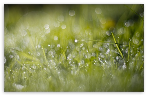 Grass Dew Bokeh HD wallpaper for Wide 16:10 5:3 Widescreen WHXGA WQXGA WUXGA WXGA WGA ; HD 16:9 High Definition WQHD QWXGA 1080p 900p 720p QHD nHD ; UHD 16:9 WQHD QWXGA 1080p 900p 720p QHD nHD ; Standard 4:3 5:4 3:2 Fullscreen UXGA XGA SVGA QSXGA SXGA DVGA HVGA HQVGA devices ( Apple PowerBook G4 iPhone 4 3G 3GS iPod Touch ) ; Smartphone 5:3 WGA ; Tablet 1:1 ; iPad 1/2/Mini ; Mobile 4:3 5:3 3:2 16:9 5:4 - UXGA XGA SVGA WGA DVGA HVGA HQVGA devices ( Apple PowerBook G4 iPhone 4 3G 3GS iPod Touch ) WQHD QWXGA 1080p 900p 720p QHD nHD QSXGA SXGA ; Dual 5:4 QSXGA SXGA ;