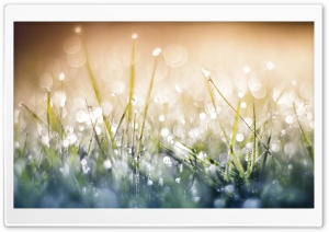 Grass Dew Bokeh Close up HD Wide Wallpaper for Widescreen