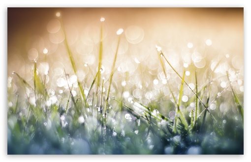 Grass Dew Bokeh Close up ❤ 4K UHD Wallpaper for Wide 16:10 5:3 Widescreen WHXGA WQXGA WUXGA WXGA WGA ; 4K UHD 16:9 Ultra High Definition 2160p 1440p 1080p 900p 720p ; UHD 16:9 2160p 1440p 1080p 900p 720p ; Standard 4:3 5:4 3:2 Fullscreen UXGA XGA SVGA QSXGA SXGA DVGA HVGA HQVGA ( Apple PowerBook G4 iPhone 4 3G 3GS iPod Touch ) ; Smartphone 5:3 WGA ; Tablet 1:1 ; iPad 1/2/Mini ; Mobile 4:3 5:3 3:2 16:9 5:4 - UXGA XGA SVGA WGA DVGA HVGA HQVGA ( Apple PowerBook G4 iPhone 4 3G 3GS iPod Touch ) 2160p 1440p 1080p 900p 720p QSXGA SXGA ;