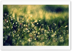 Grass Dew, Close Up HD Wide Wallpaper for Widescreen