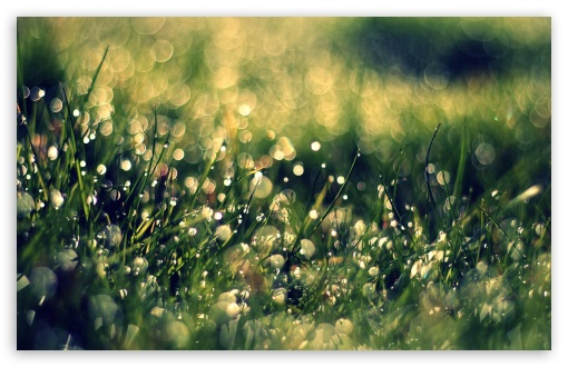Grass Dew, Close Up ❤ 4K UHD Wallpaper for Wide 16:10 5:3 Widescreen WHXGA WQXGA WUXGA WXGA WGA ; 4K UHD 16:9 Ultra High Definition 2160p 1440p 1080p 900p 720p ; Standard 4:3 5:4 3:2 Fullscreen UXGA XGA SVGA QSXGA SXGA DVGA HVGA HQVGA ( Apple PowerBook G4 iPhone 4 3G 3GS iPod Touch ) ; Tablet 1:1 ; iPad 1/2/Mini ; Mobile 4:3 5:3 3:2 16:9 5:4 - UXGA XGA SVGA WGA DVGA HVGA HQVGA ( Apple PowerBook G4 iPhone 4 3G 3GS iPod Touch ) 2160p 1440p 1080p 900p 720p QSXGA SXGA ; Dual 16:10 5:3 16:9 4:3 5:4 WHXGA WQXGA WUXGA WXGA WGA 2160p 1440p 1080p 900p 720p UXGA XGA SVGA QSXGA SXGA ;