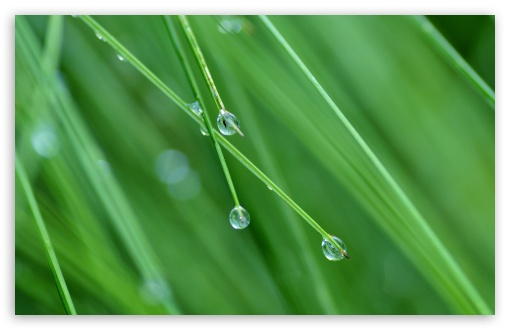 Grass Drops ❤ 4K UHD Wallpaper for Wide 16:10 5:3 Widescreen WHXGA WQXGA WUXGA WXGA WGA ; 4K UHD 16:9 Ultra High Definition 2160p 1440p 1080p 900p 720p ; Standard 4:3 5:4 3:2 Fullscreen UXGA XGA SVGA QSXGA SXGA DVGA HVGA HQVGA ( Apple PowerBook G4 iPhone 4 3G 3GS iPod Touch ) ; Tablet 1:1 ; iPad 1/2/Mini ; Mobile 4:3 5:3 3:2 16:9 5:4 - UXGA XGA SVGA WGA DVGA HVGA HQVGA ( Apple PowerBook G4 iPhone 4 3G 3GS iPod Touch ) 2160p 1440p 1080p 900p 720p QSXGA SXGA ;