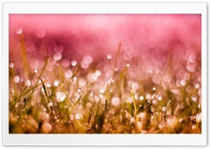 Grass Drops and Bokeh HD Wide Wallpaper for Widescreen
