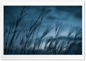 Grass, Dusk HD Wide Wallpaper for Widescreen