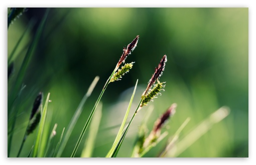 Grass Ears Macro HD wallpaper for Wide 16:10 5:3 Widescreen WHXGA WQXGA WUXGA WXGA WGA ; HD 16:9 High Definition WQHD QWXGA 1080p 900p 720p QHD nHD ; Standard 4:3 5:4 3:2 Fullscreen UXGA XGA SVGA QSXGA SXGA DVGA HVGA HQVGA devices ( Apple PowerBook G4 iPhone 4 3G 3GS iPod Touch ) ; Tablet 1:1 ; iPad 1/2/Mini ; Mobile 4:3 5:3 3:2 16:9 5:4 - UXGA XGA SVGA WGA DVGA HVGA HQVGA devices ( Apple PowerBook G4 iPhone 4 3G 3GS iPod Touch ) WQHD QWXGA 1080p 900p 720p QHD nHD QSXGA SXGA ;