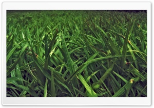 Grass Field HD Wide Wallpaper for 4K UHD Widescreen desktop & smartphone