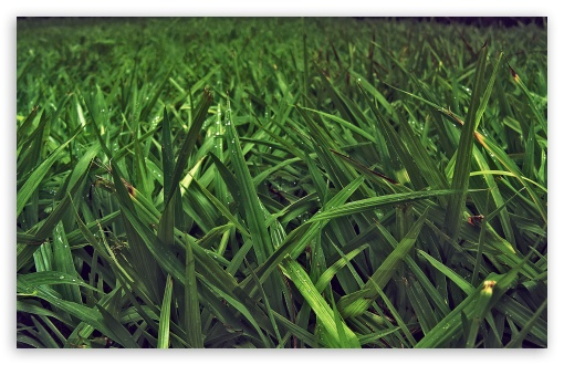 Grass Field UltraHD Wallpaper for Wide 16:10 5:3 Widescreen WHXGA WQXGA WUXGA WXGA WGA ; 8K UHD TV 16:9 Ultra High Definition 2160p 1440p 1080p 900p 720p ; Standard 4:3 5:4 3:2 Fullscreen UXGA XGA SVGA QSXGA SXGA DVGA HVGA HQVGA ( Apple PowerBook G4 iPhone 4 3G 3GS iPod Touch ) ; Tablet 1:1 ; iPad 1/2/Mini ; Mobile 4:3 5:3 3:2 16:9 5:4 - UXGA XGA SVGA WGA DVGA HVGA HQVGA ( Apple PowerBook G4 iPhone 4 3G 3GS iPod Touch ) 2160p 1440p 1080p 900p 720p QSXGA SXGA ;