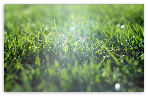 Grass Field HD wallpaper for Wide 16:10 5:3 Widescreen WHXGA WQXGA WUXGA WXGA WGA ; HD 16:9 High Definition WQHD QWXGA 1080p 900p 720p QHD nHD ; UHD 16:9 WQHD QWXGA 1080p 900p 720p QHD nHD ; Standard 4:3 5:4 3:2 Fullscreen UXGA XGA SVGA QSXGA SXGA DVGA HVGA HQVGA devices ( Apple PowerBook G4 iPhone 4 3G 3GS iPod Touch ) ; Tablet 1:1 ; iPad 1/2/Mini ; Mobile 4:3 5:3 3:2 16:9 5:4 - UXGA XGA SVGA WGA DVGA HVGA HQVGA devices ( Apple PowerBook G4 iPhone 4 3G 3GS iPod Touch ) WQHD QWXGA 1080p 900p 720p QHD nHD QSXGA SXGA ; Dual 16:10 5:3 16:9 4:3 5:4 WHXGA WQXGA WUXGA WXGA WGA WQHD QWXGA 1080p 900p 720p QHD nHD UXGA XGA SVGA QSXGA SXGA ;