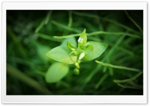 Grass Flowers HD Wide Wallpaper for Widescreen