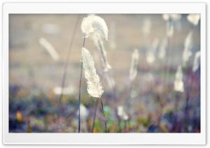 Grass Fluff, Summer Ultra HD Wallpaper for 4K UHD Widescreen desktop, tablet & smartphone