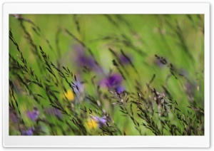 Grass Growing in the Field HD Wide Wallpaper for Widescreen