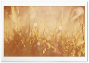 Grass Image HD Wide Wallpaper for Widescreen