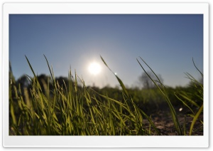 Grass In Day Light HD Wide Wallpaper for Widescreen